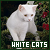 Cats: White